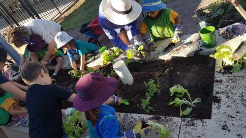 Preschool planting